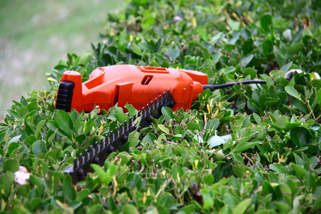 reliable shrub and bush pruning