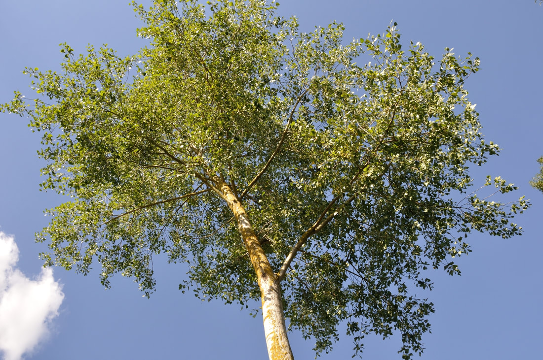 affordable tree health maintenance service